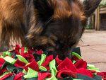 Marian Servaas (Dog-Life hondenschool